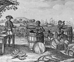 the history and impact of tobacco cultivation in virginia north america